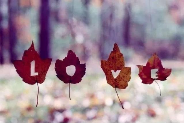 листья со словом любовь