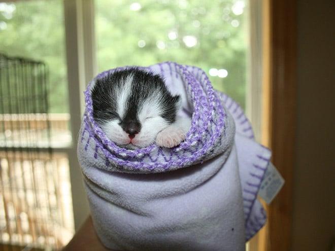 сонный котенок
