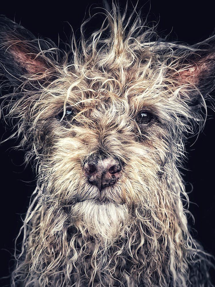портрет собаки фото