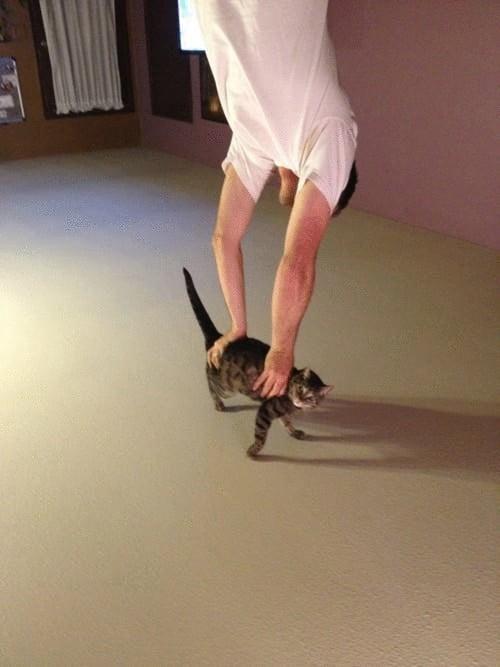 необычное фото с котом