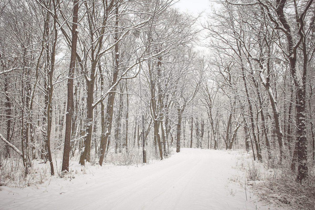 9 чудесных фото, напоминающих о прелестях зимы рис 7
