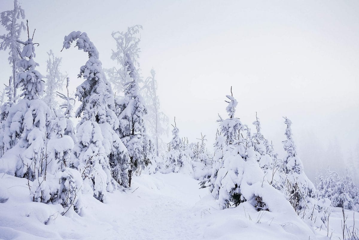 9 чудесных фото, напоминающих о прелестях зимы рис 9