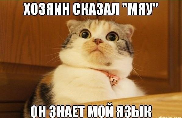 мемы с животными