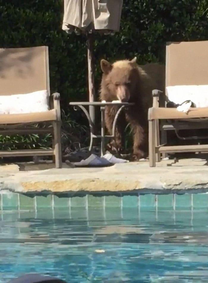 медведи рис 2