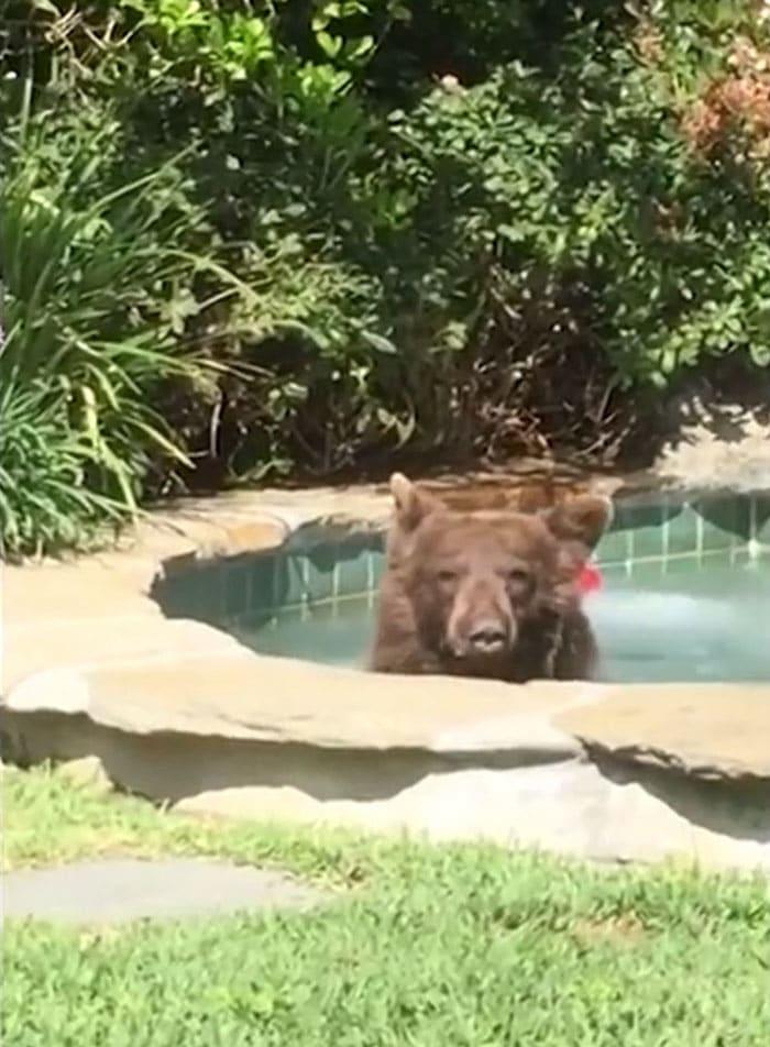 медведь рис 2