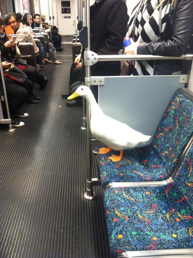 гусь в метро