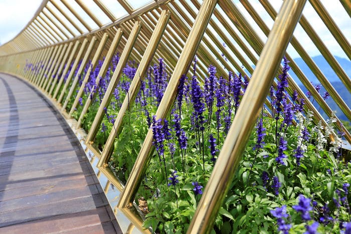 цветы на мосту