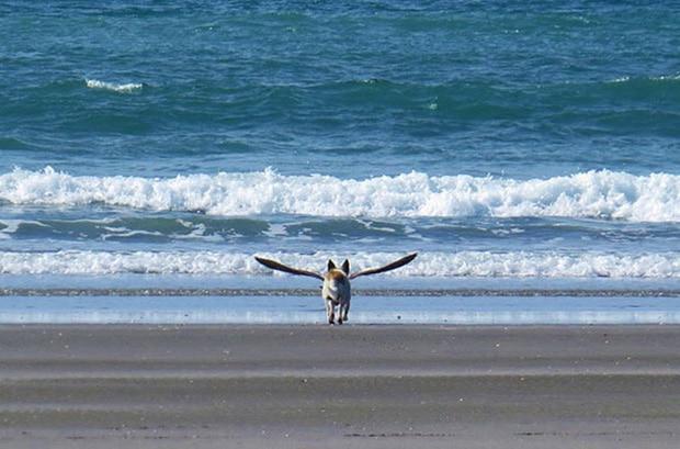 собака гонится за птицей на море