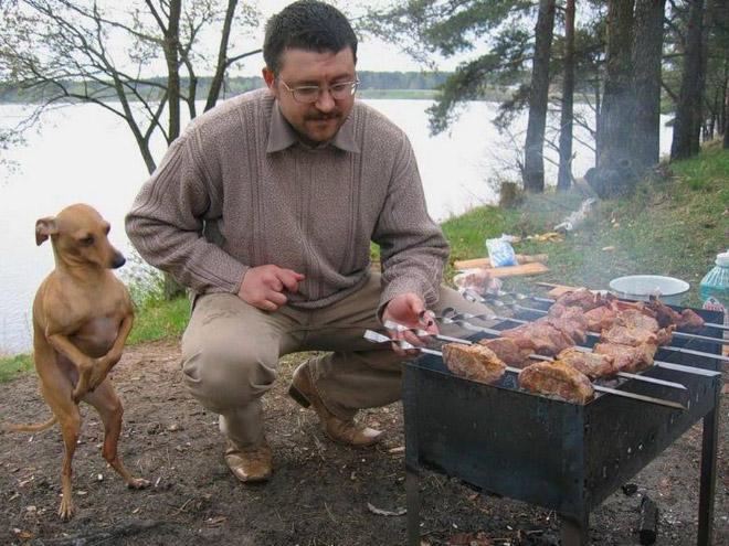 собака и хозяин жарят шашлыки