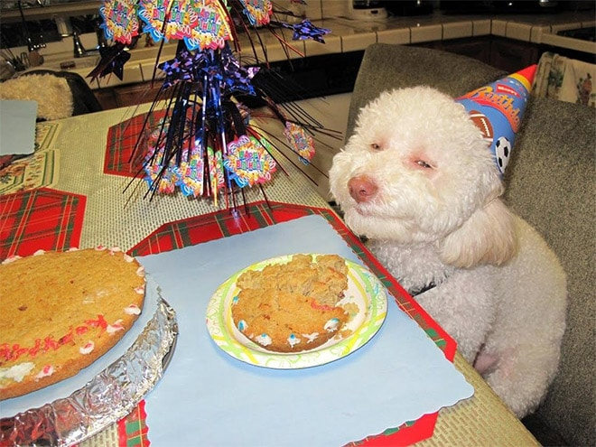 пес доволен на свой день рождения