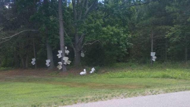 унитазы на деревьях