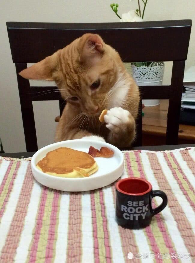 рыжий кот ест за столом