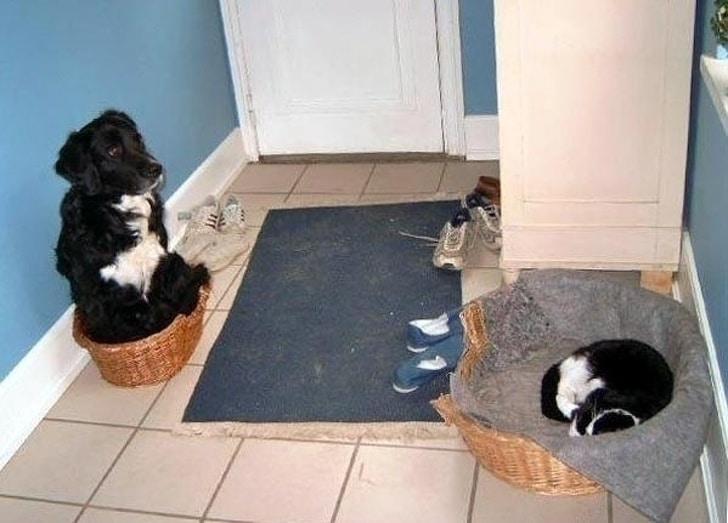 кот и собака в корзинах