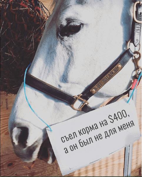 белый конь с запиской
