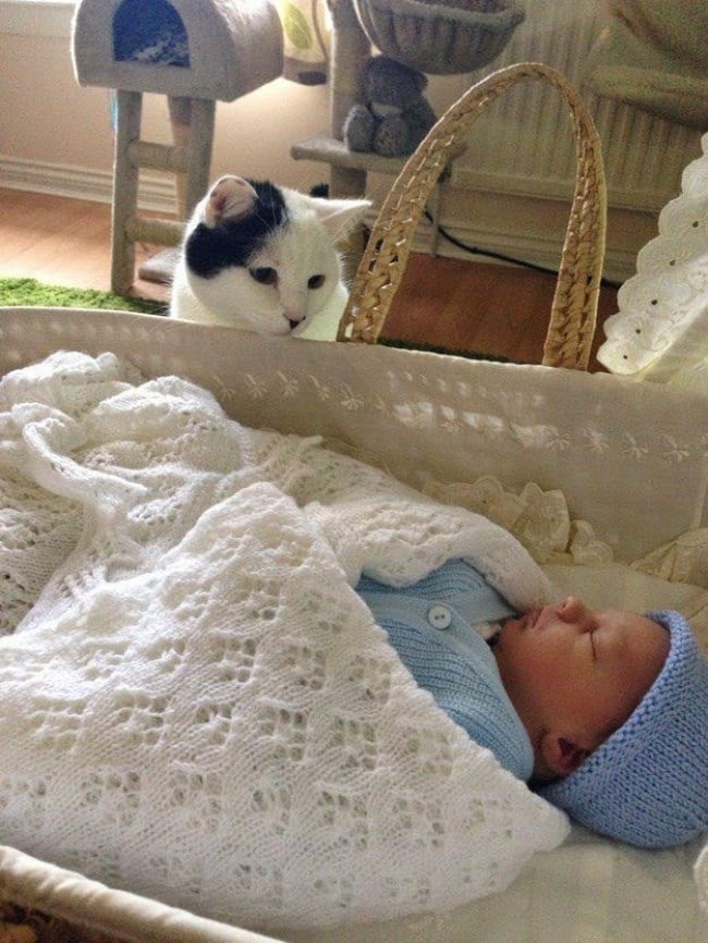 малыш и кошка рис 2