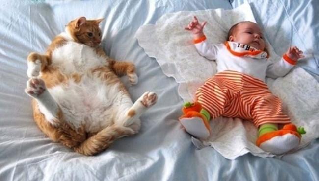 рыже-белый кот и малыш