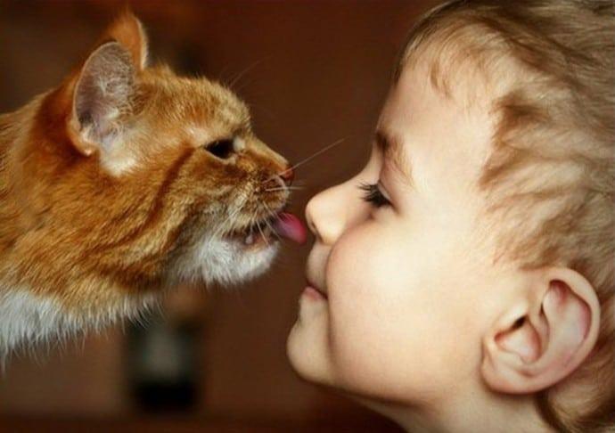 кошка лижет ребенку лицо