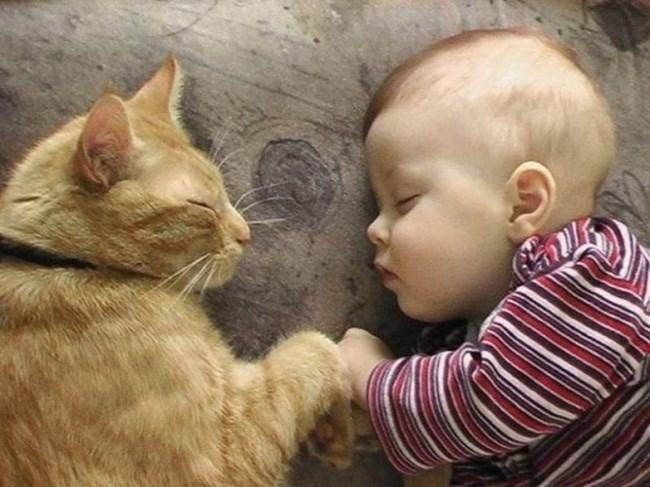 рыжий кот и малыш
