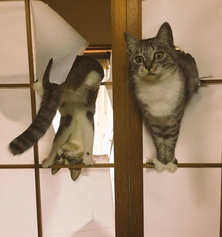 коты на дверях