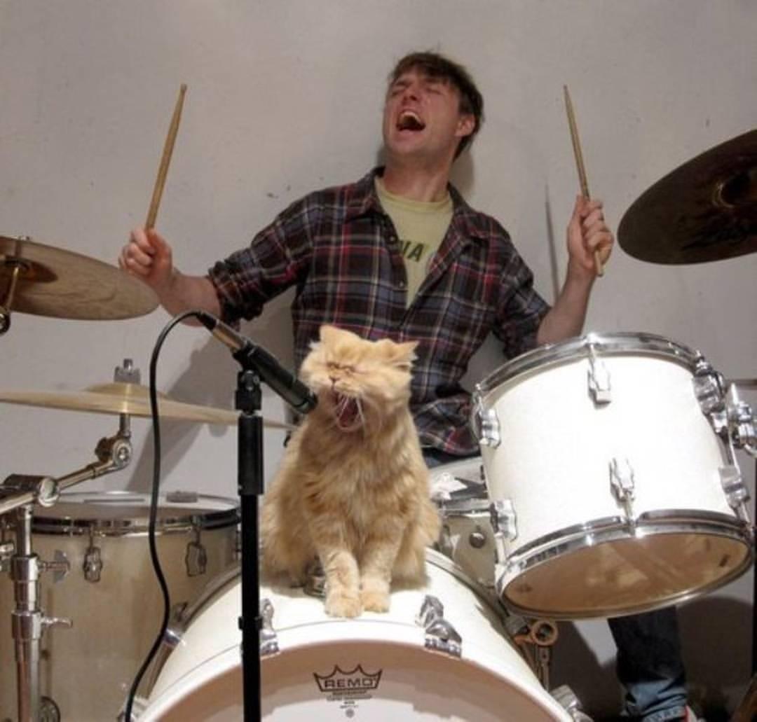 рыжий кот у микрофона