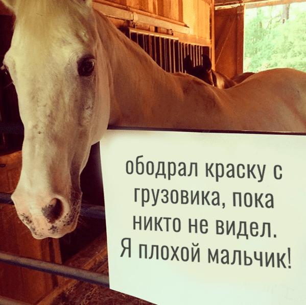 конь и смешная записка