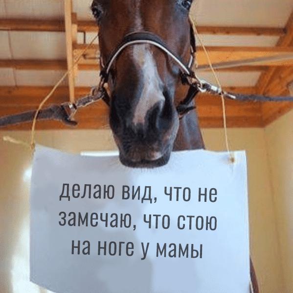 лошадь со смешной запиской