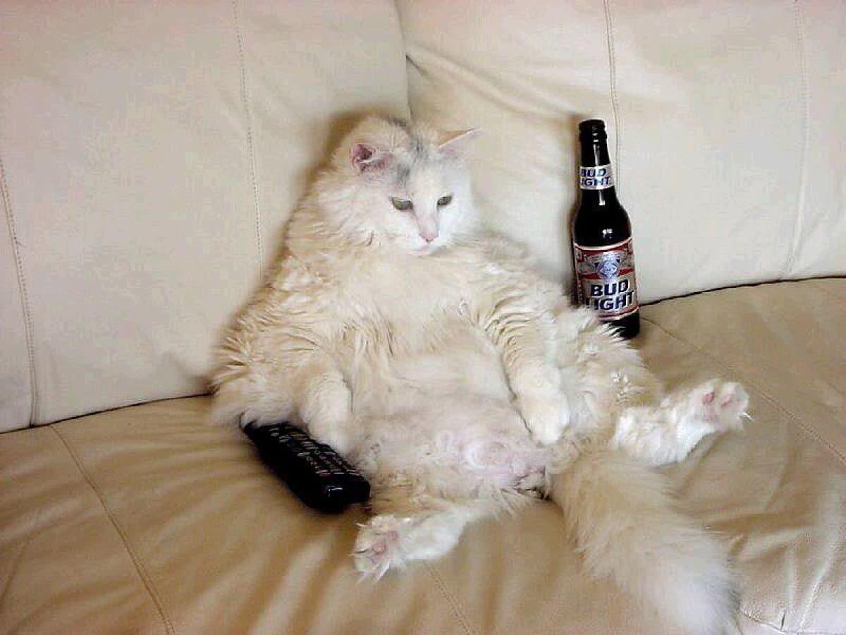 белый кот сидит на диване