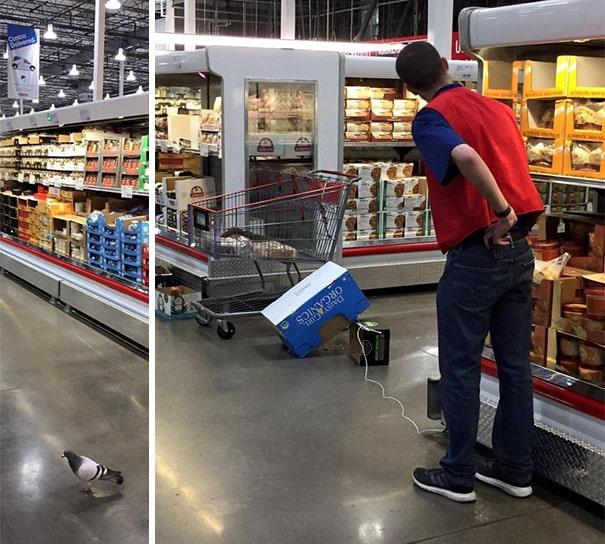 голубь залетел в супермаркет