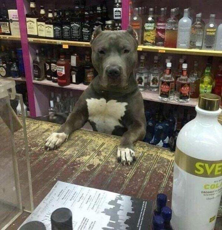 собака в магазине