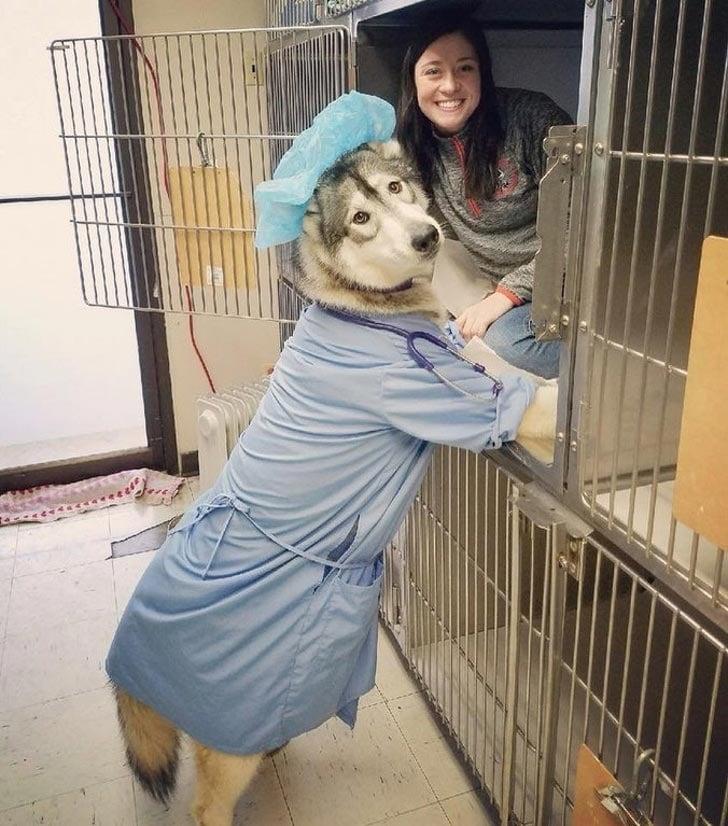 собака в одежде человека