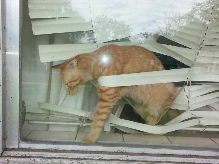 рыжий кот запутался в жалюзи