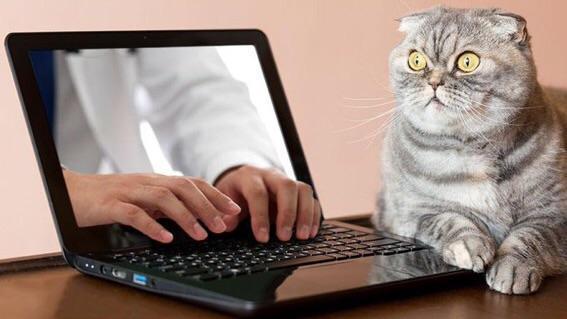 кот рядом с ноутбуком