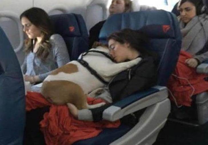 собака с хозяйкой в самолете