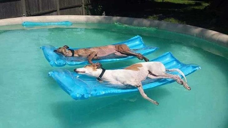 собаки на надувных матрасах
