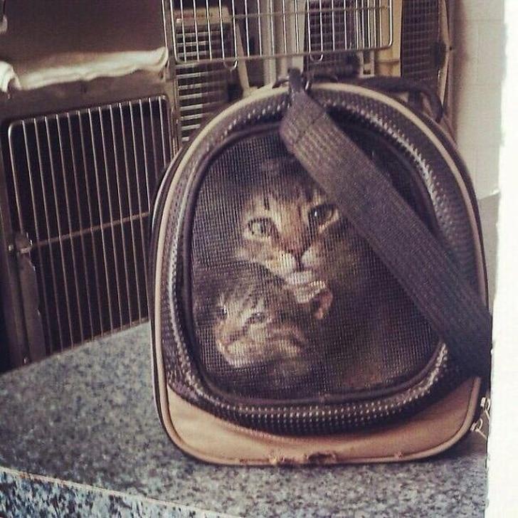 переноска для котов