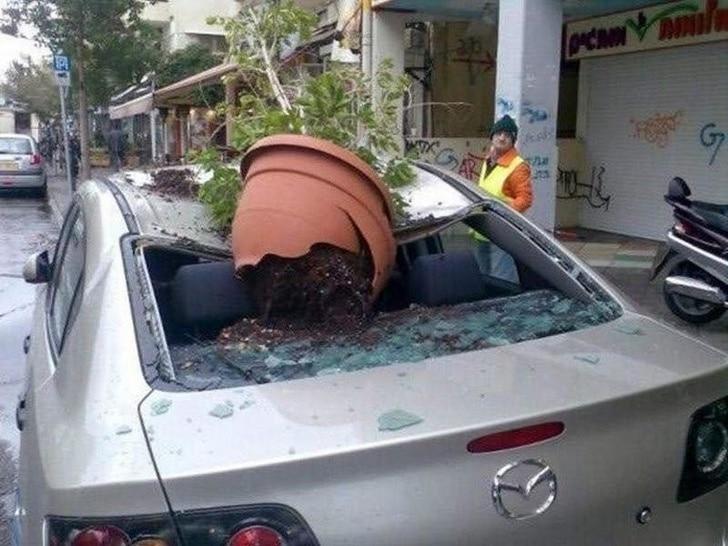 цветок упал на машину