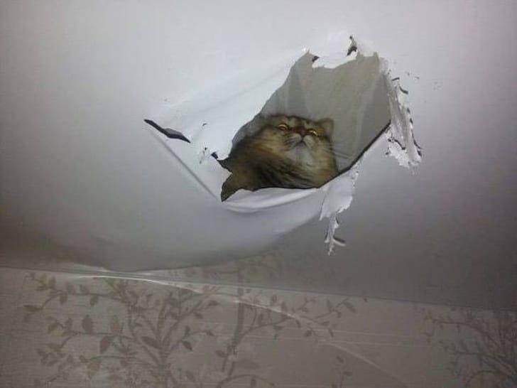 кот на потолке