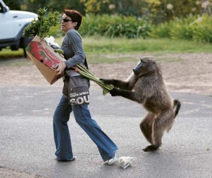 большая обезьяна