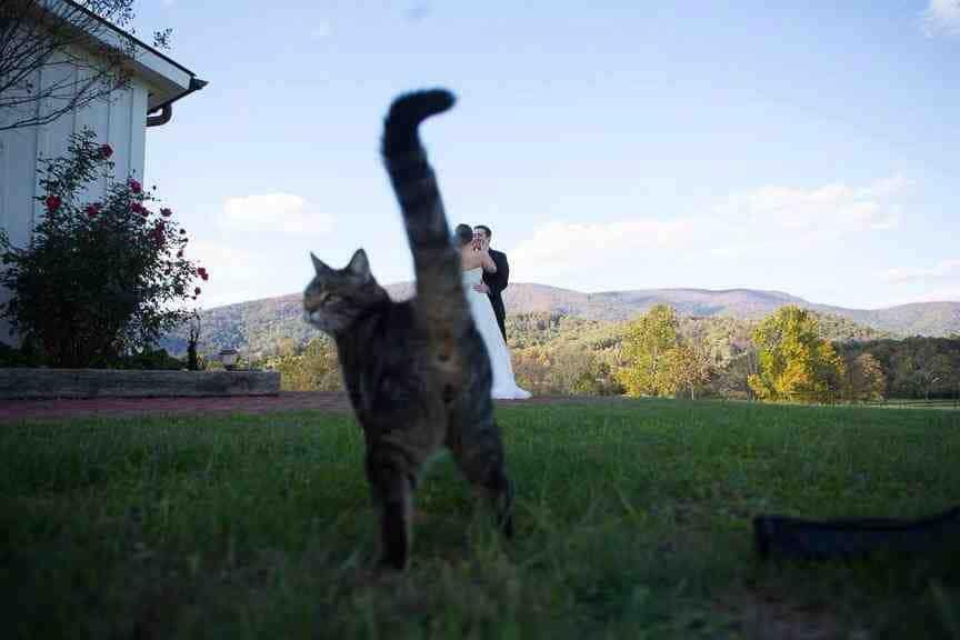 кот на фоне новобрачных