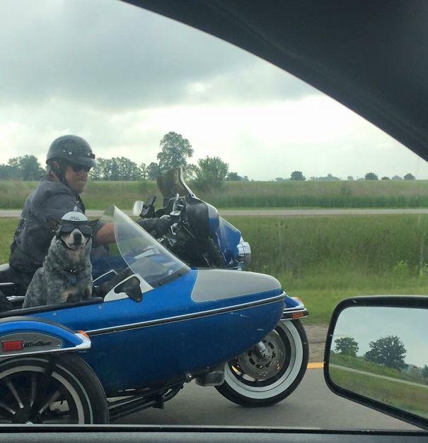пес едет на мотоцикле с хозяином
