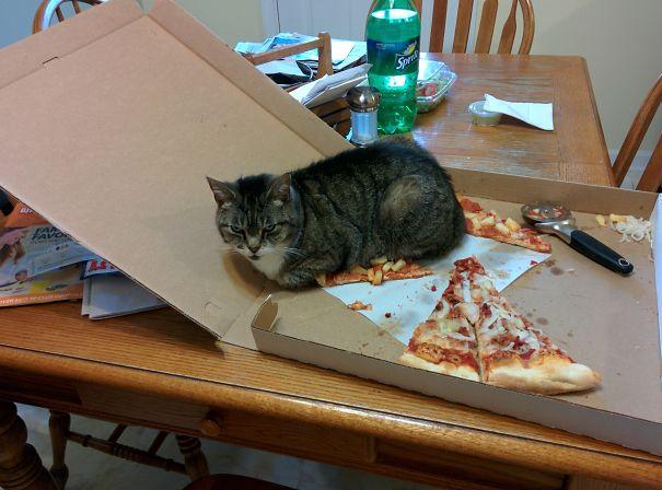 кот съел пиццу