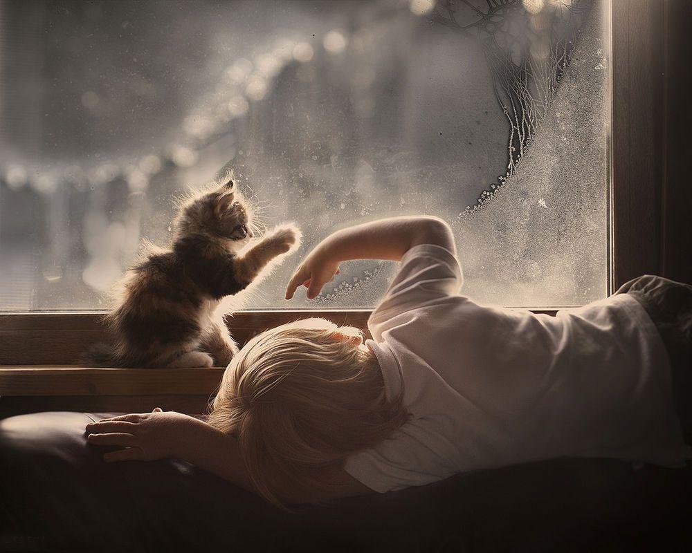 фото котенка с мальчиком
