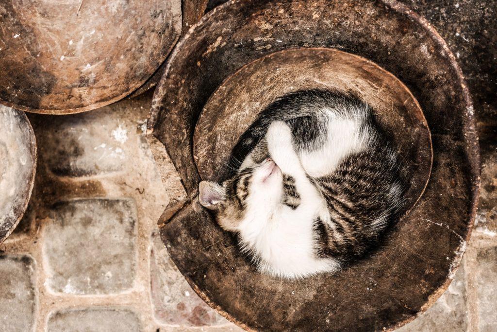 котенок спит фото рис 2