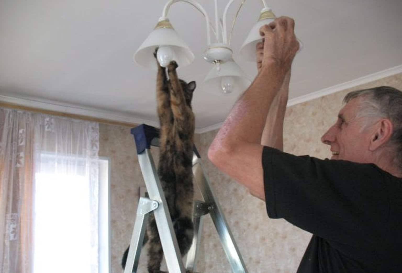 кот вкручивает лампочку в люстру