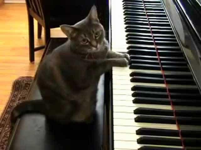 кот и пианино