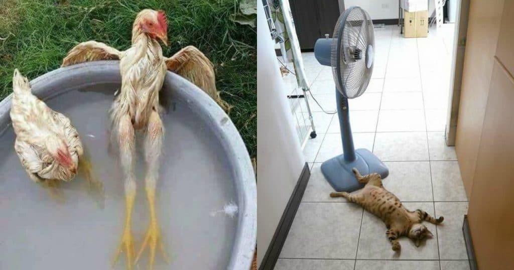 трудности приводят юморные картинки про жару мень