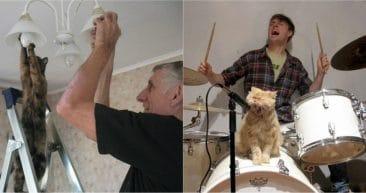 13 смешных котов, которые ведут себя как люди! Часть II