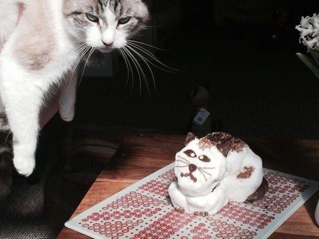 торт в форме кота