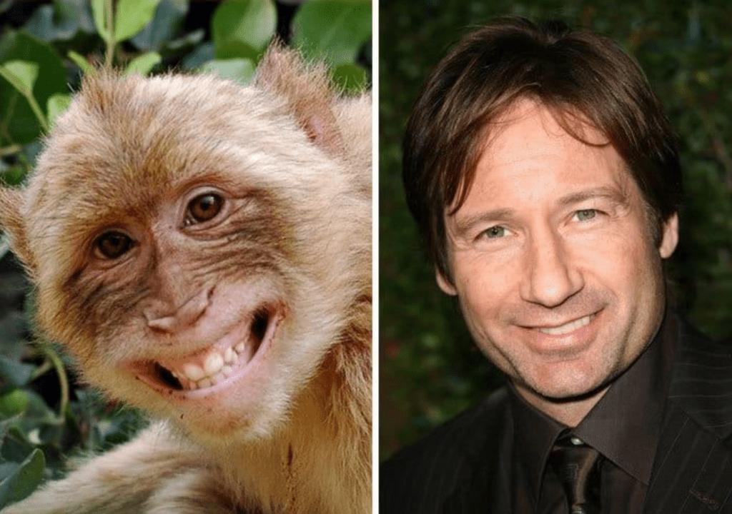 обезьяна и дэвид духовны