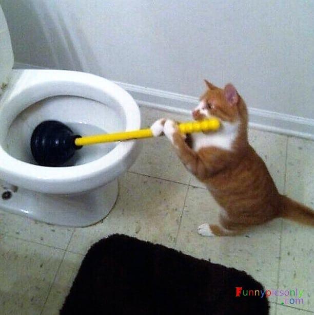 кот чистит унитаз